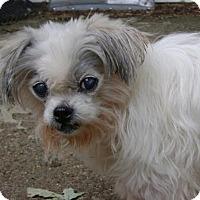 Adopt A Pet :: Ivory - Livonia, MI