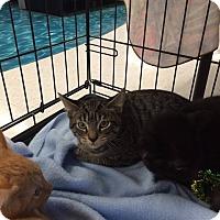 Adopt A Pet :: Magellan - Mansfield, TX
