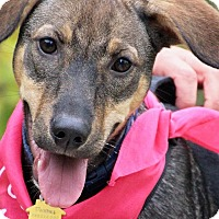 Adopt A Pet :: Peaches - Fort Atkinson, WI