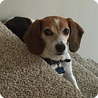 Adopt A Pet :: Kylie - Bridgeton, MO