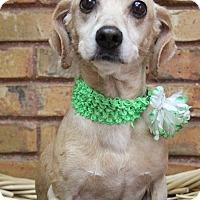 Adopt A Pet :: Harmony - Benbrook, TX