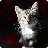 Adopt A Pet :: Rick - Yucaipa, CA