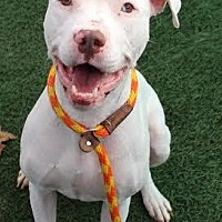 Adopt A Pet :: Irish - Auburn, CA
