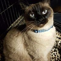 Adopt A Pet :: Nellie - Pasadena, CA