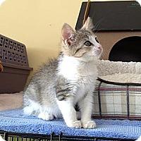 Adopt A Pet :: Eternity & Petunia - Island Park, NY