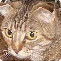 Adopt A Pet :: Topanga - Davis, CA