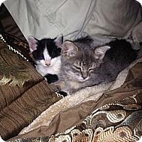 Adopt A Pet :: MooCat & Smokey - Laguna Woods, CA