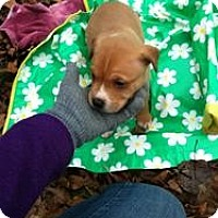 Adopt A Pet :: Buddy - Blanchard, OK