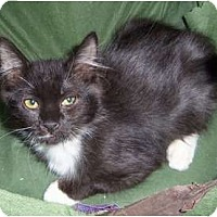 Adopt A Pet :: Whiska - Orlando, FL