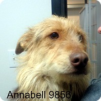 Adopt A Pet :: Annabell - baltimore, MD