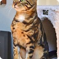 Adopt A Pet :: Sundar - Davis, CA
