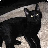 Adopt A Pet :: Phoebe - Mount Laurel, NJ