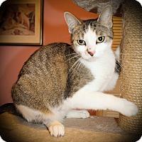 Adopt A Pet :: Clarabelle - Hamilton, ON