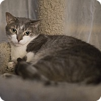 Adopt A Pet :: Vegas - Toronto, ON