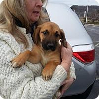 Adopt A Pet :: Harley - Rexford, NY