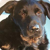 Adopt A Pet :: LENNY VON COLBERT - Los Angeles, CA