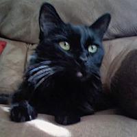 Adopt A Pet :: Bono - Orange County, CA