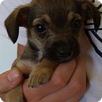 Adopt A Pet :: Q-TIP - Corona, CA