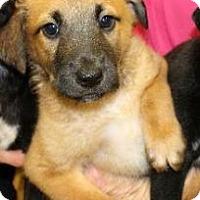 Adopt A Pet :: Mud - Hillside, IL