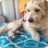 Adopt A Pet :: Knox - Elk Grove, CA