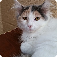 Adopt A Pet :: Snowflake - Chula Vista, CA