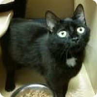 Adopt A Pet :: Leticia - North Haven, CT