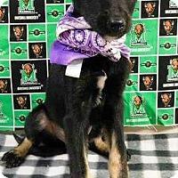 Adopt A Pet :: Twix - Oswego, IL