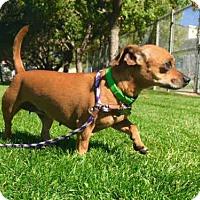 Adopt A Pet :: DORY - Murray, UT