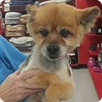 Adopt A Pet :: Fancy - House Springs, MO