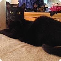 Adopt A Pet :: CASH - Golsboro, NC