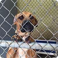 Adopt A Pet :: Prince - St. Catharines, ON