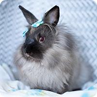 Adopt A Pet :: Barbara - Montclair, CA