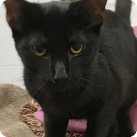 Adopt A Pet :: Neil - Elyria, OH