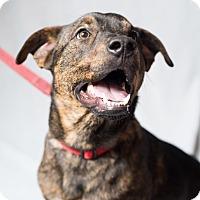 Adopt A Pet :: Ted - Minneapolis, MN