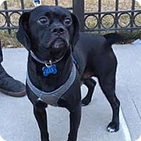 Adopt A Pet :: Max - Bronx, NY