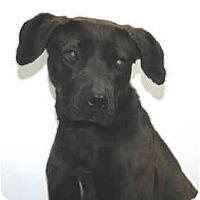 Adopt A Pet :: Hershey - Port Washington, NY