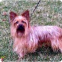 Adopt A Pet :: Bandit - Minnetonka, MN