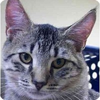 Adopt A Pet :: Aesop - Annapolis, MD