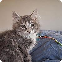 Adopt A Pet :: Trina - Bedford, MA