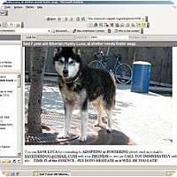 Adopt A Pet :: Luca - Huntington Station, NY