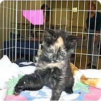 Adopt A Pet :: Gremlin - Davis, CA