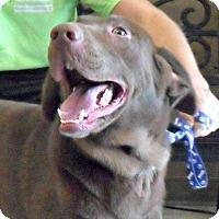 Adopt A Pet :: Jack - white settlment, TX