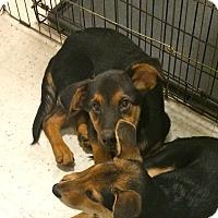 Adopt A Pet :: Tramp in CT - East Hartford, CT