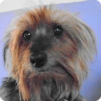 Adopt A Pet :: Tisha - Chesterfield, MO