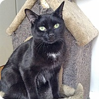 Adopt A Pet :: Tom Tom - Mississauga, Ontario, ON