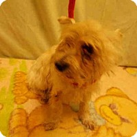 Adopt A Pet :: *RUBY - Upper Marlboro, MD