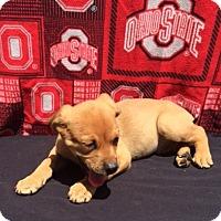 Adopt A Pet :: Stitch - East Sparta, OH