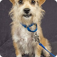 Adopt A Pet :: SERGE-PLAYFUL!!! - Davis, CA
