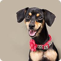 Adopt A Pet :: Abby - Hammond, LA