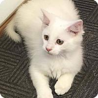 Adopt A Pet :: Opal - Covington, VA